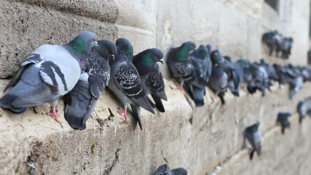 hd 1080:pigeons - yeni cami mosque stock videos & royalty-free footage