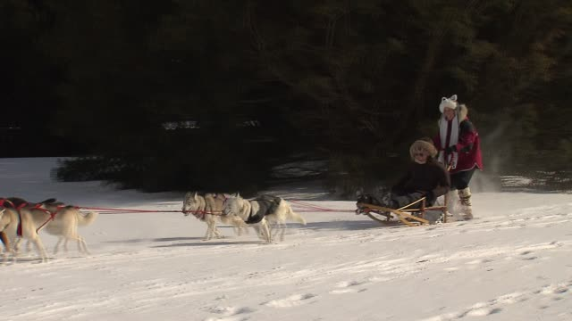 10th annual husky heroes event honors siberian huskies and dog sledding at the morton arboretum on in lisle illinois - dupage county stock videos & royalty-free footage
