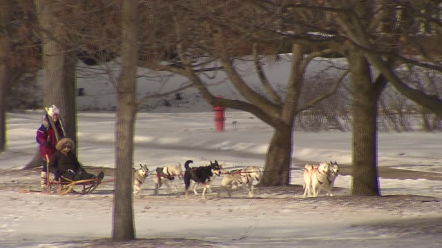 10th annual husky heroes event honors siberian huskies and dog sledding at the morton arboretum on in lisle illinois - beruflicher umgang mit tieren stock-videos und b-roll-filmmaterial