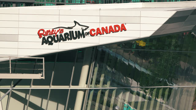 vidéos et rushes de zoom-in on the logo or sign on the ripley's aquarium on july 10, 2017; in toronto, ontario, canada. the aquarium is located at the base of the cn... - panneau d'entrée