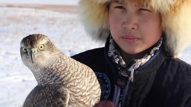 year-old yerasil serikbekuli making preparations to take over the eagle hunting from his father that inherited from his grandfather, is seen with an... - eagle stock videos & royalty-free footage