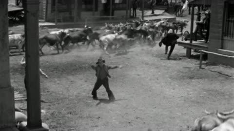 1800s high angle wide shot men running away / bulls stampeding around building on western main street - kaos bildbanksvideor och videomaterial från bakom kulisserna
