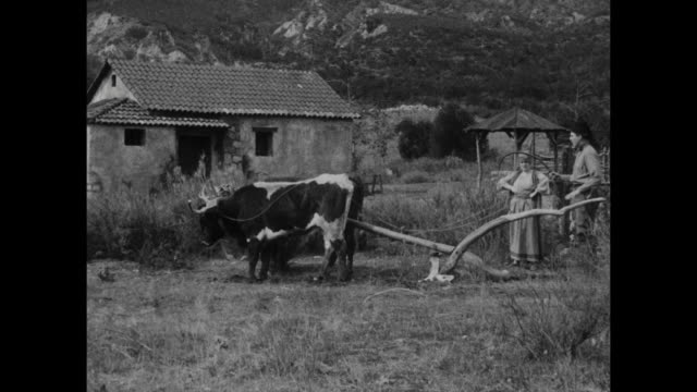 1910s After given instructions by peasant woman (Blanche Sweet), man (House Peters) is unable to tame a pair of bulls