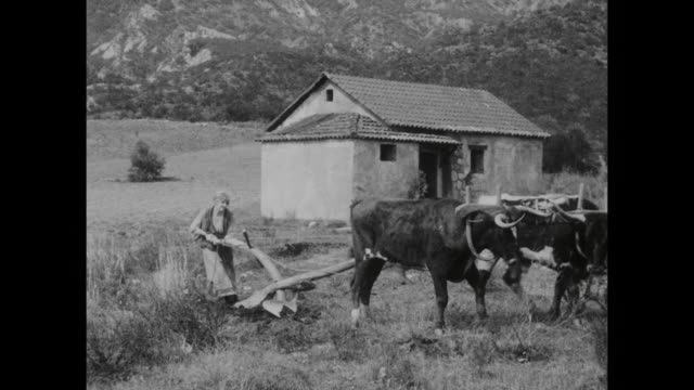 1910s new tasks on the farm prove to be challenging for peasant woman (blanche sweet) - 1910 stock-videos und b-roll-filmmaterial