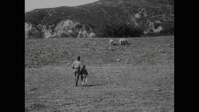 1910s peasant man (house peters) and son herd sheep - 1910 stock-videos und b-roll-filmmaterial
