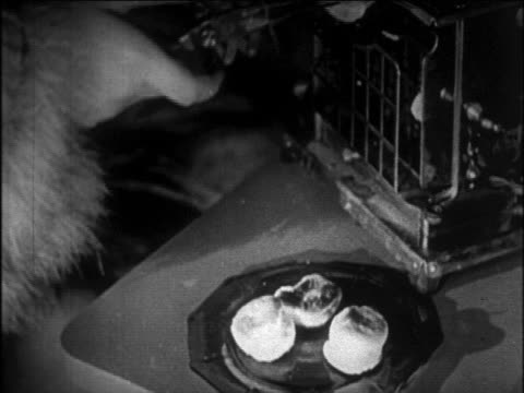 vídeos y material grabado en eventos de stock de b/w 1920s close up hand of woman toasting marshmallows indoors with electric toaster + marshmallow holder - marshmallow