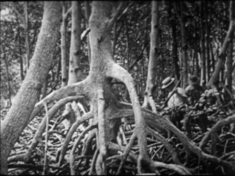 b/w 1920s federal agents walking in florida swamp searching for stills / prohibition / newsreel - 禁酒法点の映像素材/bロール