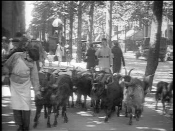 b/w 1920s herd of goats walking on city sidewalk / paris, france / documentary - herding stock videos & royalty-free footage