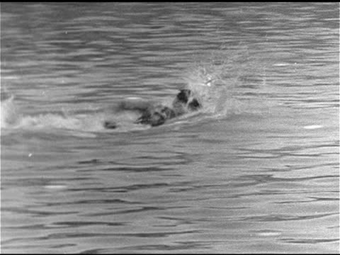 swimming johnny weissmuller standing poolside w/ africanamerican children sitting bg johnny diving into pool swimming out/back to pool edge ms johnny... - gold medal stock videos & royalty-free footage