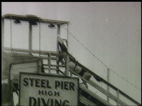 b/w 1920s/30s horse climbing up ladder to top of platform / woman climbs on back / steel pier - stunt person stock videos & royalty-free footage