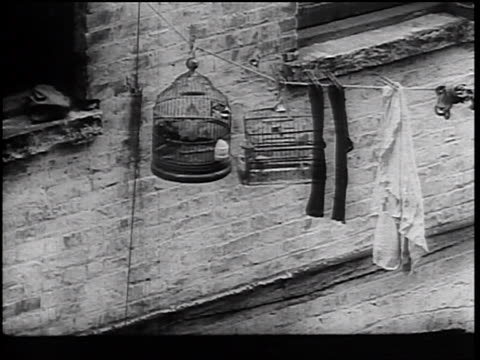 stockvideo's en b-roll-footage met b/w 1930s 2 bird cages with birds hanging on laundry line outside wall of crumbling buidling - kleine groep dingen