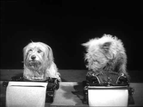 b/w 1930s 2 dogs sitting at typewriters watching offscreen cat boxing match - skrivmaskin bildbanksvideor och videomaterial från bakom kulisserna