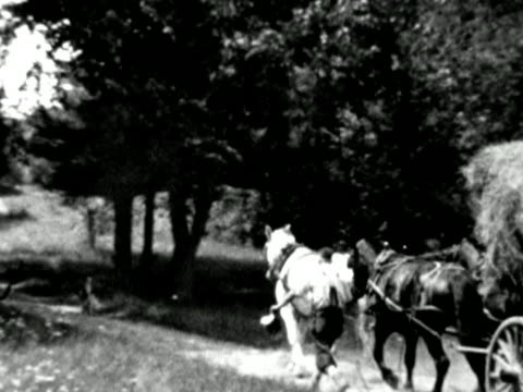 1930s b/w ws pan hay cart being pulled by horses, man walking aside, woman following / connecticut, usa - femmina con gruppo di maschi video stock e b–roll