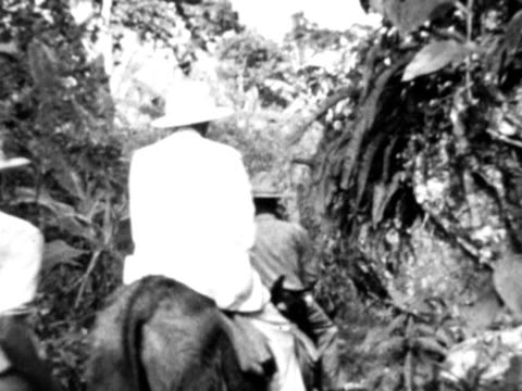 vidéos et rushes de 1930s b/w ms men on horses walking through thick forest / haiti - antilles occidentales