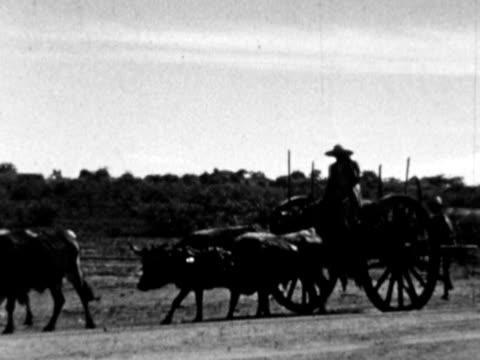 vídeos y material grabado en eventos de stock de 1930s b/w montage farmers going down road on cart pulled by oxen / haiti - hispaniola