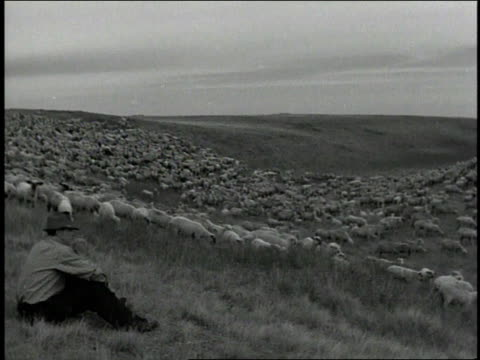1930s b/w shepherd sitting on ground and mountie riding horse watching grazing sheep / canada - shepherd stock videos & royalty-free footage