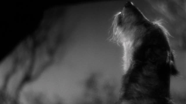 1930s close up dog barking - bark stock videos & royalty-free footage