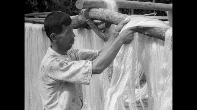 of the philippines: agriculture: male worker cutting strips from abaca stalk, worker pulling abaca fiber out of machine, another worker adjusting... - canapa video stock e b–roll