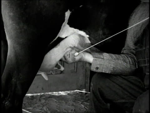 1930s cu farmer milking a cow / united states - stereotypical stock videos & royalty-free footage