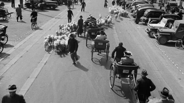 vidéos et rushes de b/w 1930s high angle asian city street scene with rickshaws + sheep herd / asia - pousse pousse