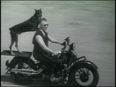 B/W 1930s man driving motorcycle while Doberman stands behind him