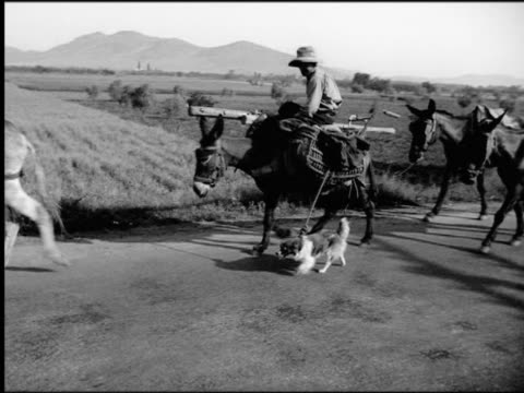 1930s pan man riding donkey leading dog + mules by ropes on country road / spain - the spanish donkey stock videos & royalty-free footage