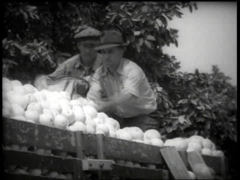 1930s men loading picked grapefruit into truck / united states - lavoratore emigrante video stock e b–roll