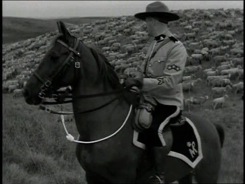 1930s ms rcmp mountie on horse watching over sheep in a field / canada - canada stock videos & royalty-free footage