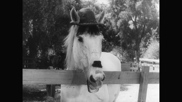 1930s stan laurel discovers oliver hardy is reincarnated as a horse - 1930 1939 stock videos & royalty-free footage