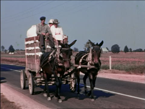 1940s couple + man ride wagon full of cotton pulled by mules on country road / Kentucky / home movie