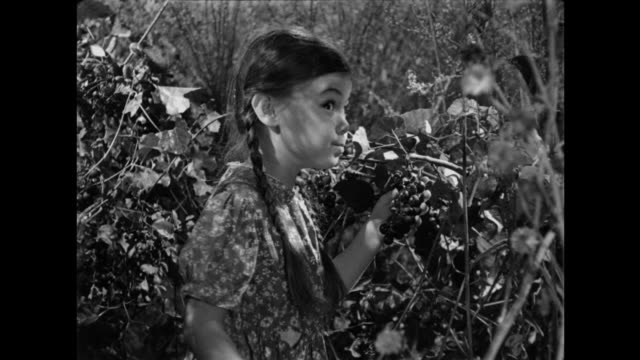 1940s excited little girl indulges in field grapes as a reluctant grandmother joins her - hungry stock videos and b-roll footage