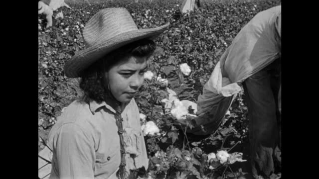1940s farm hands picking cotton - lavoratore agricolo video stock e b–roll