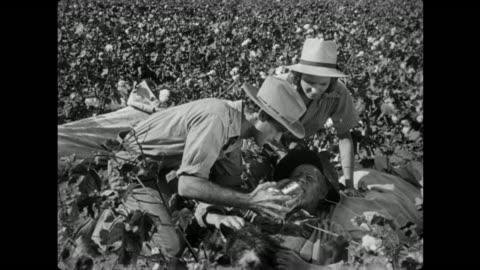 1940s man collapses in the cotton field from heat stroke and exhaustion - törstig bildbanksvideor och videomaterial från bakom kulisserna