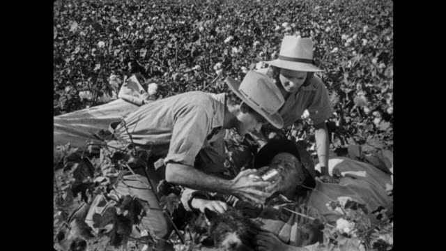 vídeos y material grabado en eventos de stock de 1940s man collapses in the cotton field from heat stroke and exhaustion - sediento