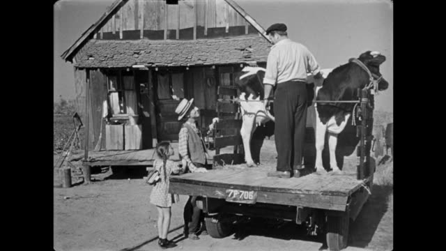 1940s Men and an excited little girl bring a healthy dairy cow to the front of a broken down farmhouse