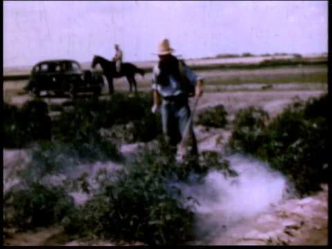 1940s montage japanese worker spraying crops as guard on horseback follows him / crystal city, texas, united states - recreational horseback riding stock videos & royalty-free footage
