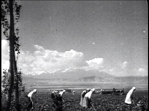 1940s MONTAGE people working in the fields / Russia