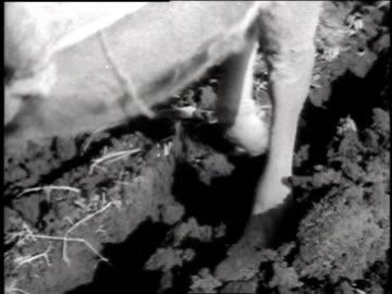 vídeos y material grabado en eventos de stock de 1940s ox pulling plow / japan - arar