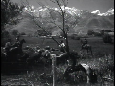 1940s reenactment cowboys on horseback driving cattle on prairie with snowcapped mountains in background / united states  - galopp gangart von tieren stock-videos und b-roll-filmmaterial