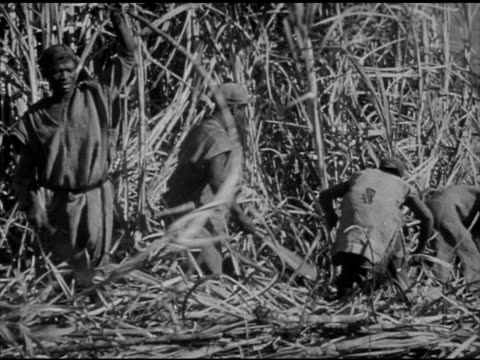 south africa bantus vs south african bantu farmers field workers plowing w/ shovels harvesting bamboo vs families sitting outside of huts talking... - newsreel stock videos & royalty-free footage