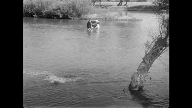 1940s stranded cow trapped in flood waters - cattle stock videos & royalty-free footage