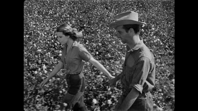 1940s woman dreams she is walking lovingly through a beautiful cotton field with man - 1940 stock videos & royalty-free footage