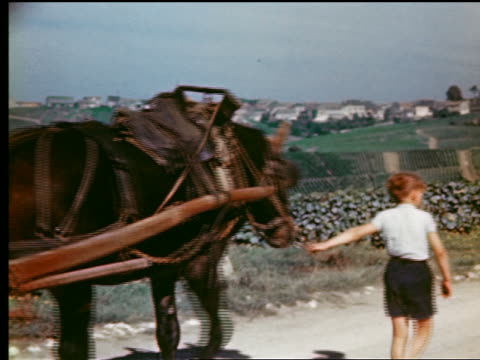 vidéos et rushes de 1940s/50s redhead boy leading horse-drawn cart loaded with barrels on road next to vineyard / (epernay?) france - champagne