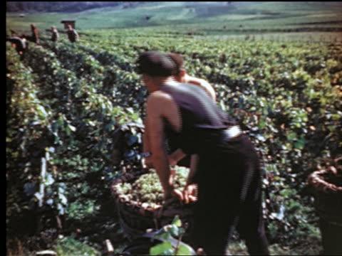 1940s/50s pan two men lifting + carrying large basket of grapes in vineyard / (epernay?) france - vineyard stock videos & royalty-free footage