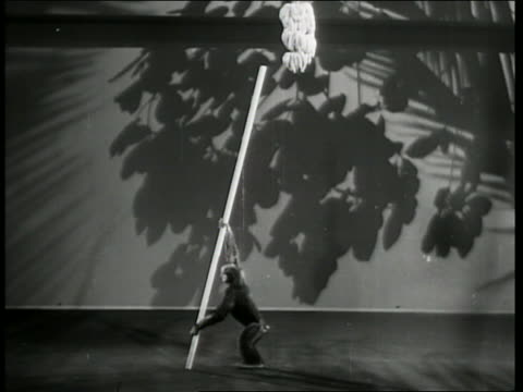 b/w 1941chimpanzee climbing up pole + grabbing banana from ceiling / of pups and puzzles - banana stock videos & royalty-free footage