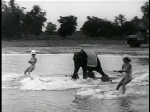 vídeos y material grabado en eventos de stock de b/w 1950s pan baby elephant waterskiing with two women / newsreel - animales de trabajo