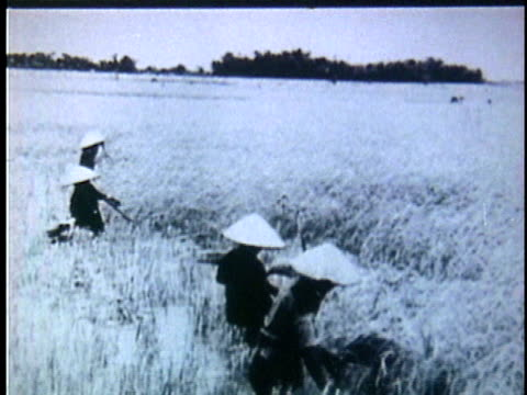 1950s b/w montage vietnamese peasant farmers harvesting grain in field / vietnam - 麦わら帽子点の映像素材/bロール