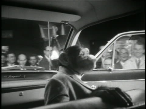 """B/W 1950s chimpanzee """"Zip"""" in suit sitting in car riding past smiling crowd of people / newsreel"""