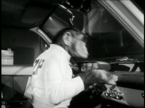 "b/w 1950s chimpanzee ""zip"" sitting in front seat of car bouncing head in time with music / newsreel - early rock & roll stock videos & royalty-free footage"