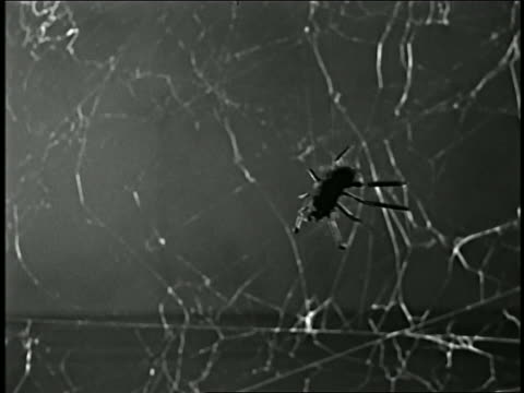 1950s close up rack focus fake spider moving toward CAM / spider web in background